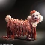 Bộ lịch 2013 với chú chó Max ăn diện theo phong cách Lady Gaga