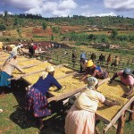 Châu Phi và nỗi lo sản xuất nông nghiệp