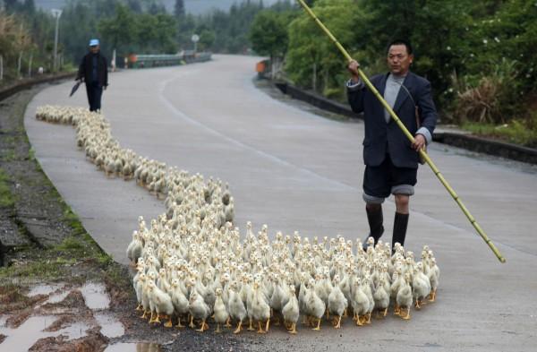 130424-china-bird-flu-h7n9-changzhou-shandong-01