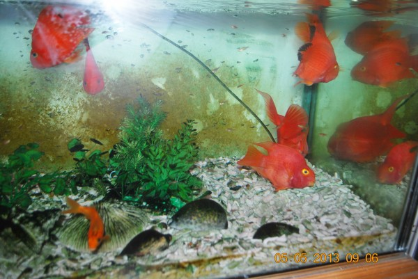 130505-phphuoc-exhibiting-fishes-02