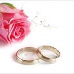 Những đóa hoa hồng màu hồng trong ngày Vu Lan