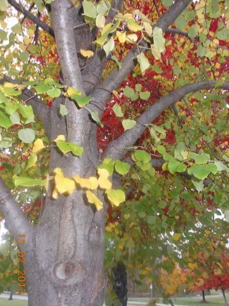 131102-ha-maryland-autumn-resize-01