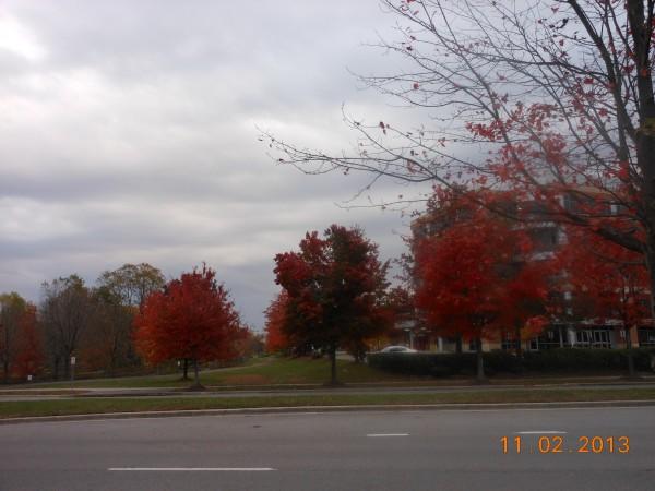 131102-ha-maryland-autumn-resize-04