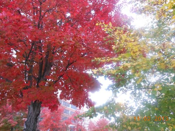 131102-ha-maryland-autumn-resize-07