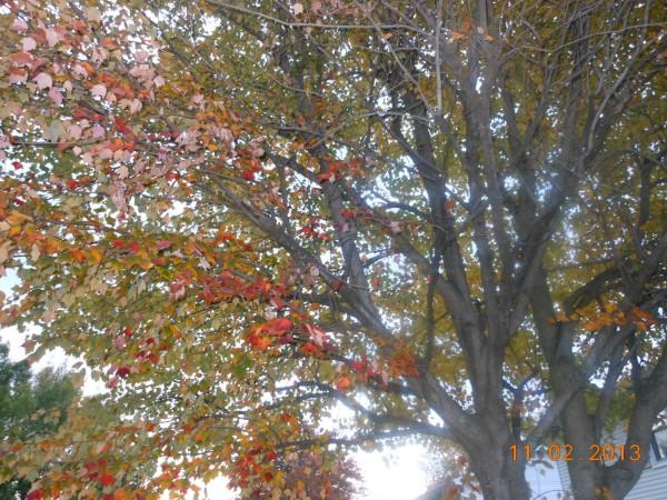 131102-ha-maryland-autumn-resize-08