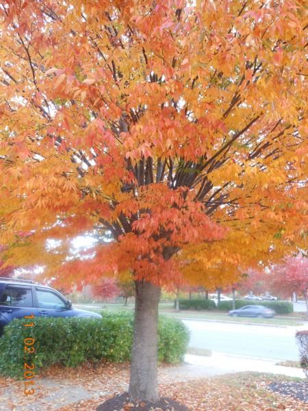 131102-ha-maryland-autumn-resize-09