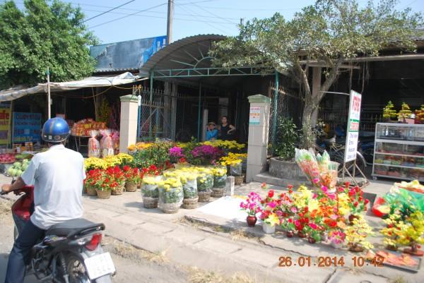 140126-phphuoc-thanhhoa-longan-taomo-29_resize