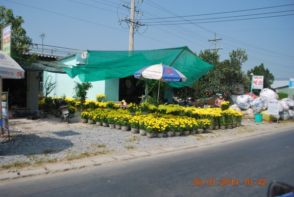 140126-phphuoc-thanhhoa-longan-taomo-34_resize