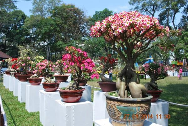 140127-phphuoc-hoihoaxuan-taodan-073_resize