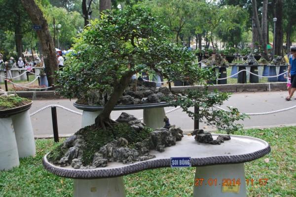 140127-phphuoc-hoihoaxuan-taodan-110_resize