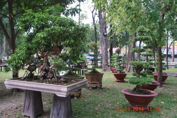 140127-phphuoc-hoihoaxuan-taodan-114_resize
