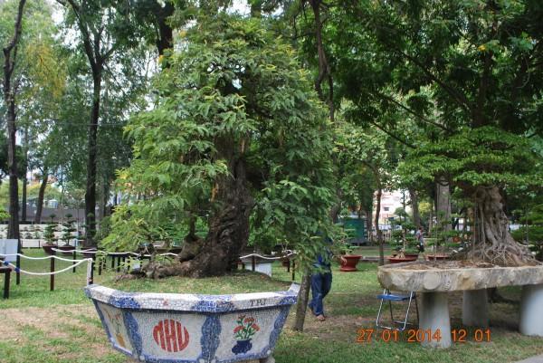 140127-phphuoc-hoihoaxuan-taodan-117_resize