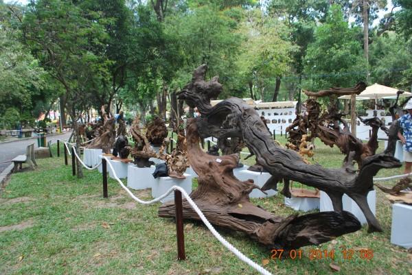 140127-phphuoc-hoihoaxuan-taodan-126_resize