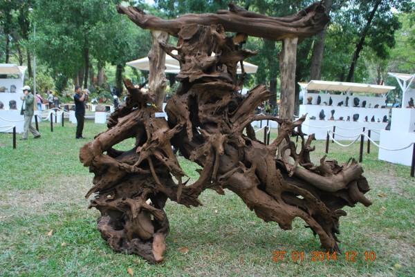 140127-phphuoc-hoihoaxuan-taodan-128_resize