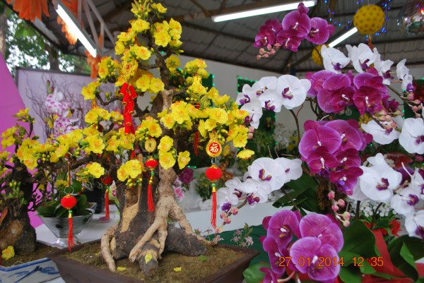 140127-phphuoc-hoihoaxuan-taodan-178_resize