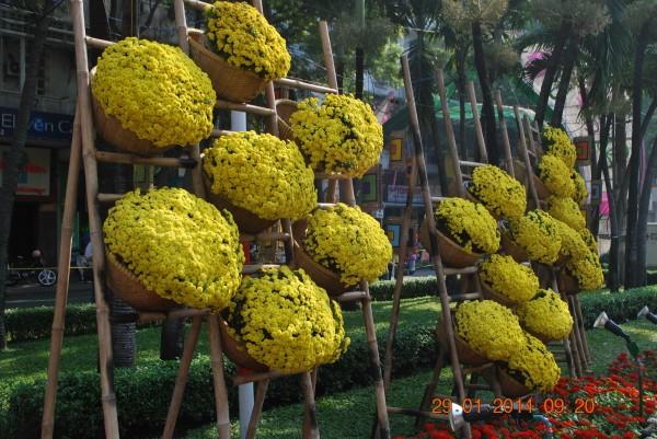 140129-phphuoc-duonghoa-nguyenhue--sg-tetgiapngo-173_resize