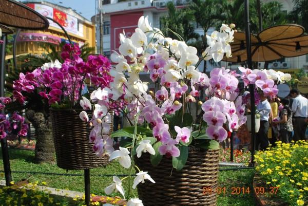 140129-phphuoc-duonghoa-nguyenhue--sg-tetgiapngo-202_resize