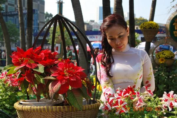 140129-phphuoc-duonghoa-nguyenhue--sg-tetgiapngo-210_resize