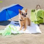 Thiết bị định vị GPS cho cún cưng