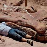 Phát hiện loài khủng long lớn nhất xưa nay