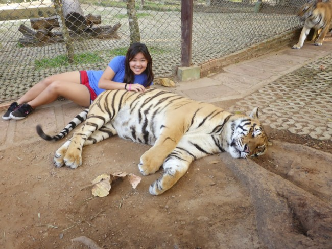 tiger-people-02