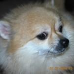 Chú cún mít ướt và hay dỗi hờn….