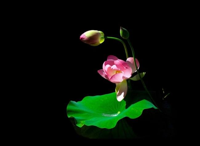 hoa-vietnam