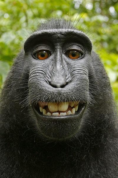 selfie-cheeky macaque-2011-01