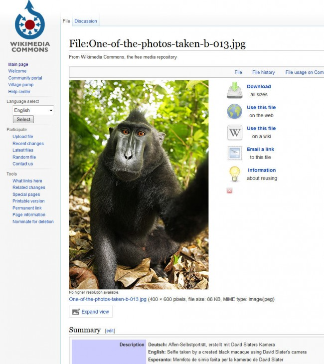 selfie-cheeky macaque-2011-04