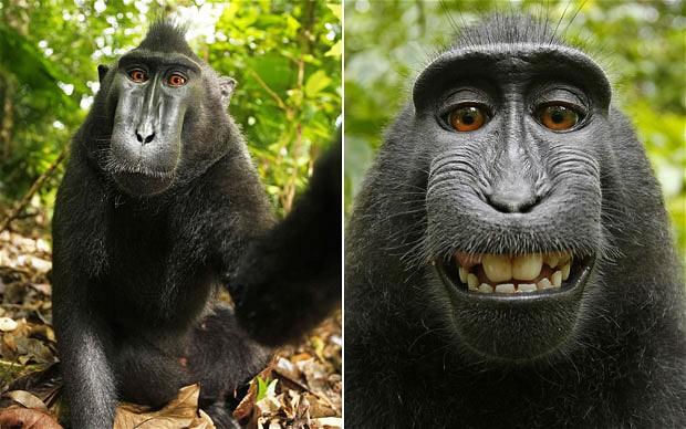 selfie-cheeky macaque
