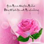 Bông hồng màu hồng mùa Vu Lan