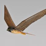 Dùng chim robot để xua đuổi chim thật