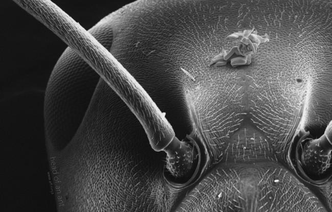 nano-sculpture-05-human-head-a-ant