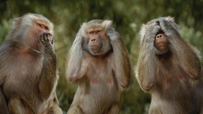 Funny-monkeys-give-motivation-message_resize