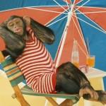 Truy tìm thủy tổ loài khỉ