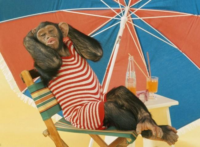 funny-monkey_resize