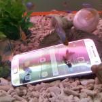 VIDEO: Thử cho em Samsung Galaxy S7 tắm trong hồ cá