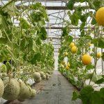 Hội thảo nông nghiệp thông minh chất lượng cao SmartAgri