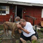 Những nạn nhân 4 chân của bão Harvey