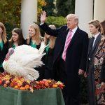 """Hai chú gà tây Drumstick và Wishbone được Tổng thống Donald Trump """"ân xá"""" trong lễ Tạ ơn"""