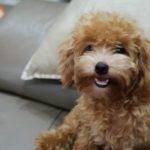CẦU CỨU! HELP!: Bé Cún cứu cả gia đình thoát chết trong vụ cháy chung cư Carina vừa bị lạc