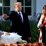 Mỗi năm có 45 triệu con gà tây hy sinh trong ngày Thanksgiving Day ở Mỹ