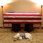 Chú chó cuối cùng của cựu Tổng thống George H.W. Bush