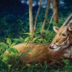 Google phối hợp cùng WWF Việt Nam thực hiện chiến dịch bảo tồn sao la
